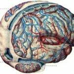 вены головно мозга